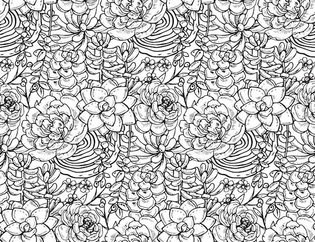 Patrón sin fisuras con plantas suculentas dibujadas a mano sobre fondo blanco.