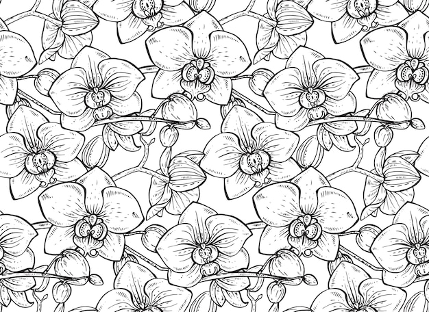 Patrón floral transparente con ramas de orquídeas dibujadas a mano con flores para telas, textiles, papel. hermoso fondo floral blanco y negro.