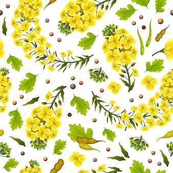 Patrón de flores de colza canola brassica napus