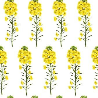 Patrón de flores de colza, canola. brassica napus.