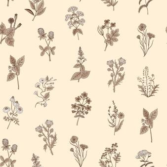 Patrón de hierbas medicinales dibujadas a mano o