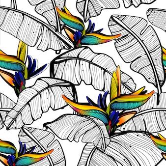 Patrón de hojas de ave del paraíso