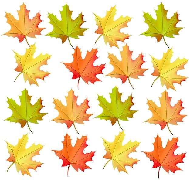 Patrón de hojas de otoño vector realista sobre fondo blanco