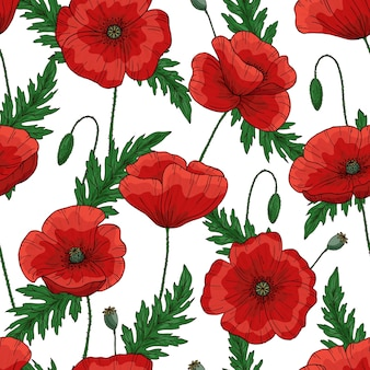 Patrón saemless con amapolas rojas. papaver. tallos y hojas verdes.