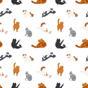 Patrón transparente de colores con gatos de diferentes razas para dormir, caminar, lavarse, estirarse sobre fondo blanco