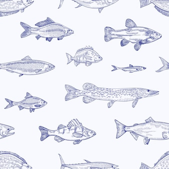 Patrón transparente monocromo con varios tipos de peces dibujados a mano con líneas de contorno