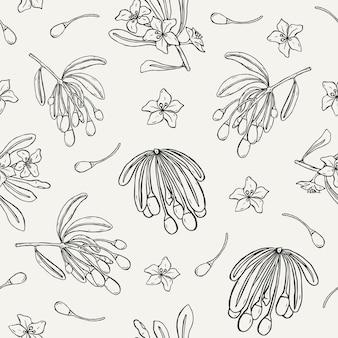 Patrón transparente natural con bayas de goji, hojas y flores dibujadas a mano con líneas de contorno sobre fondo claro.