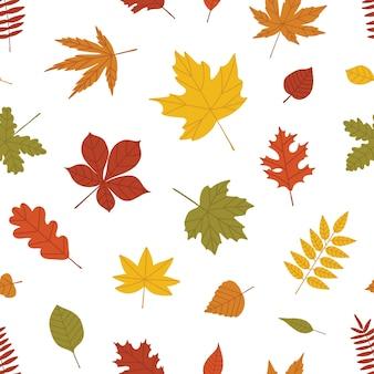 Patrón transparente natural con hojas caídas de otoño de árboles forestales en blanco