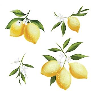 Patrón de vector de limón