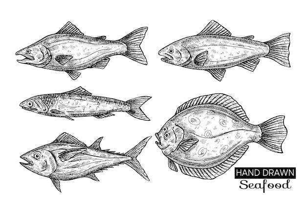 Peces de mar dibujados a mano.