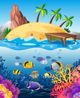 Peces nadando bajo el agua e isla