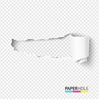 Pedazo de papel rasgado rizado en blanco en un pergamino con bordes rasgados