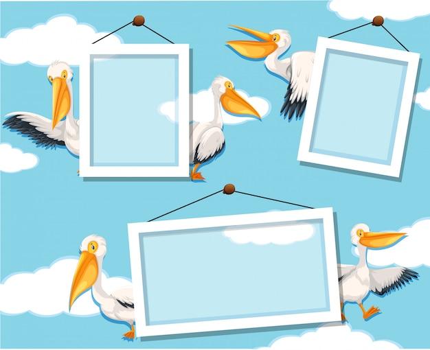 Pelican en marco de fotos