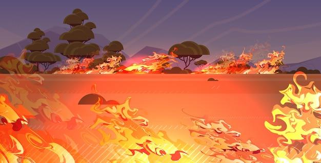 Peligroso incendio forestal hierba bushfire bosque en humo desarrollo de incendios maderas secas árboles ardientes calentamiento global concepto de desastre natural intenso naranja llamas horizontales