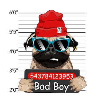 Penal de bulldog galés con sombrero rojo. foto de arresto. foto de mugshot. cartel de la policía, ficha policial de la policía. bulldog francés