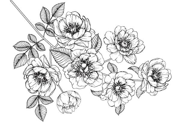 Peonía julia rosa hoja y dibujos de flores. vintage dibujado a mano ilustraciones botánicas.