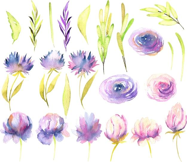 Peonías rosadas y púrpuras de la acuarela
