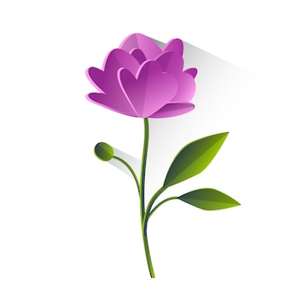 Peony flower violet green leaf isolated