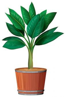Pequeña planta en la maceta