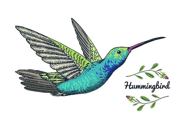 Pequeño colibrí pájaro rufo. iconos exóticos de animales tropicales. zafiro de cola dorada.