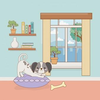 Pequeño perro mascota en la habitación de la casa