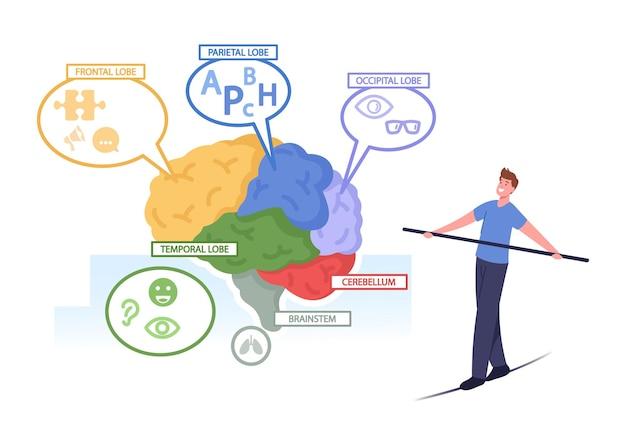 Pequeño personaje masculino que se balancea en una cuerda en una enorme anatomía del cerebro humano separada en partes coloridas: frontal, parietal, occipital, lóbulos temporales, cerebelo, tronco del encéfalo. ilustración de vector de gente de dibujos animados