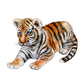 Pequeño tigre aislado. acuarela