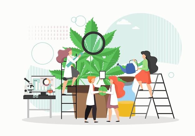 Pequeños personajes femeninos en batas de laboratorio que cultivan una planta de cáñamo gigante en maceta