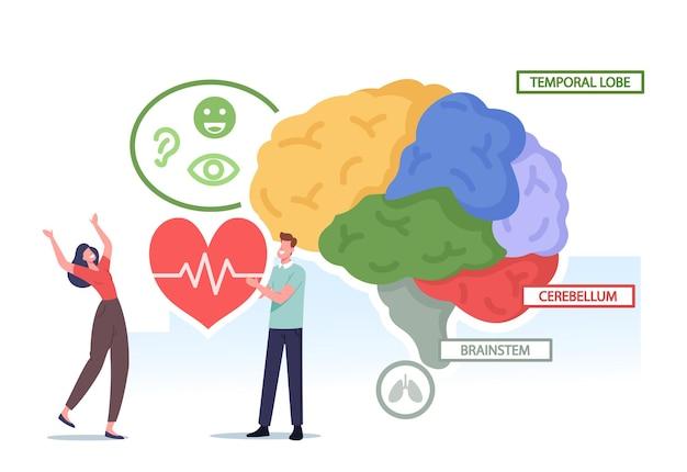 Pequeños personajes masculinos y femeninos que sostienen el corazón en el enorme cerebro humano separados en partes coloridas lóbulo temporal, cerebelo y tabla de anatomía médica del tronco encefálico. ilustración de vector de gente de dibujos animados