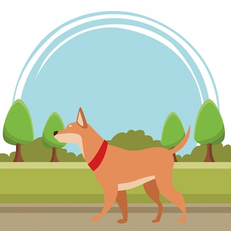 Perro animal mascota