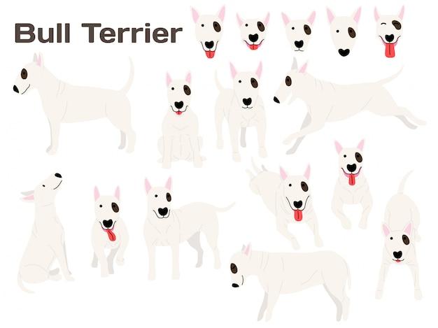 Perro bull terrier en acción