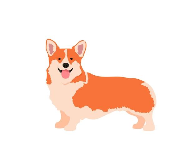 Perro corgi
