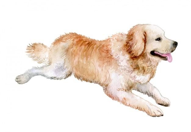 Perro golden retriever en acuarela