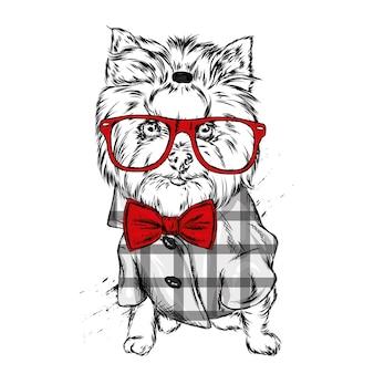 Perro con una hermosa camisa