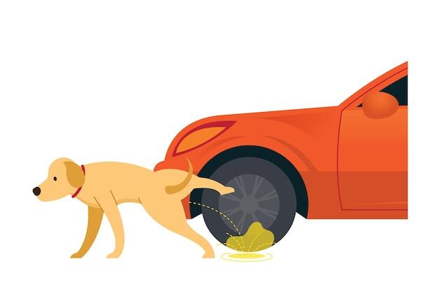 Perro orinando sobre neumáticos y ruedas