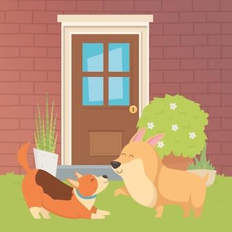 Perros caricaturas diseño vector ilustrador