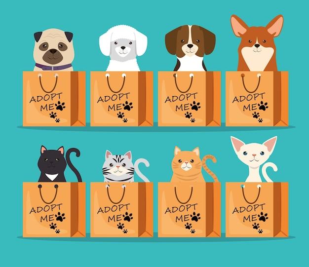 Perros y gatos mascotas en bolsas de adopción personajes