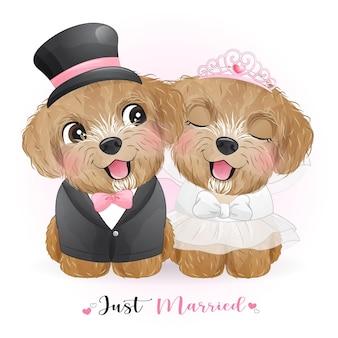 Perros lindos del doodle con ropa de boda, recién casados