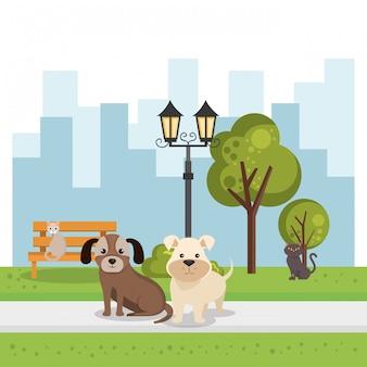 Perros lindos en la escena del parque