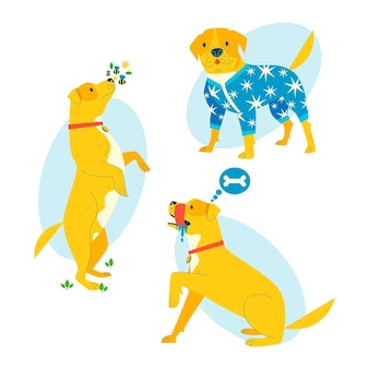 Perros de raza pitbull de diseño plano