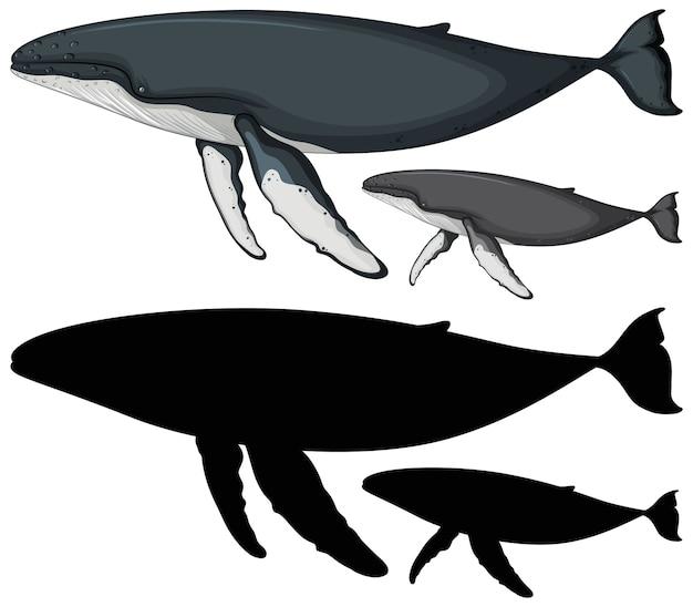 Personajes de ballena jorobada y su silueta en blanco
