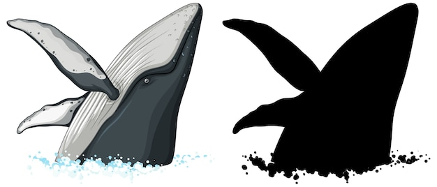 Personajes de ballena jorobada y su silueta sobre fondo blanco.