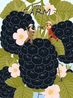 Personajes de dibujos animados de granjero con cosecha de frutos de mora en ilustraciones de carteles de granja