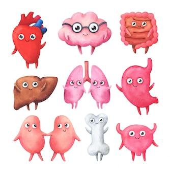 Personajes divertidos en forma de órganos internos sanos.