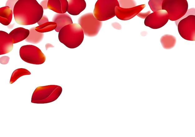 Pétalos de rosas rojas cayendo sobre fondo blanco