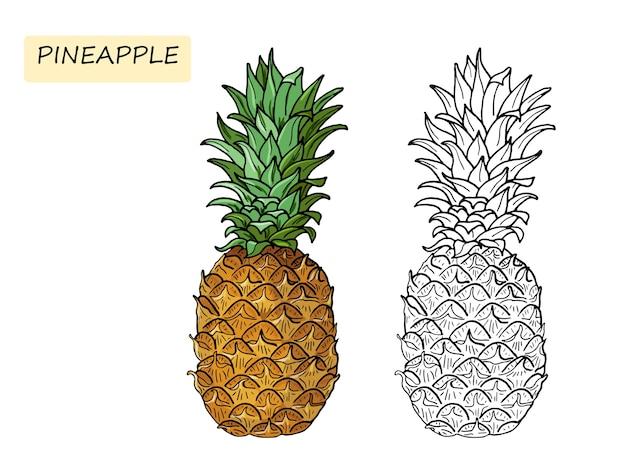 Piña libro de colorear para niños. comida tropical de verano para un estilo de vida saludable. fruta entera. ilustración dibujada a mano. bosquejo sobre un fondo blanco.