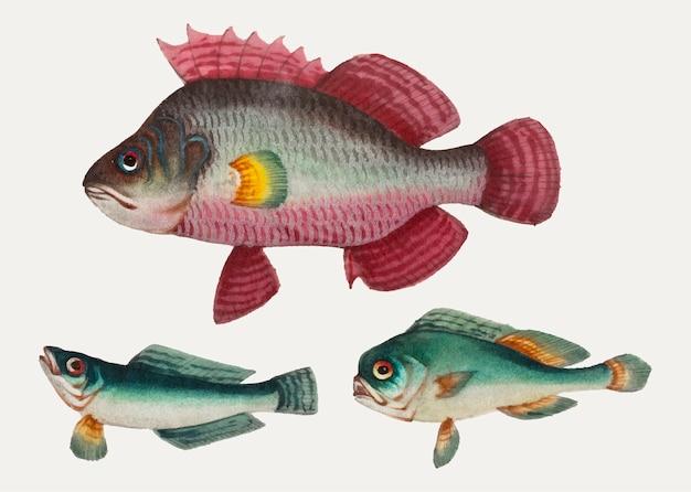 Pintura china de un pez rosa y dos peces verdes.