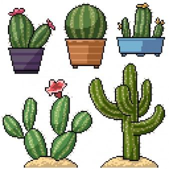 Pixel art set decoración cactus aislado