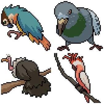Pixel art set pájaro salvaje aislado
