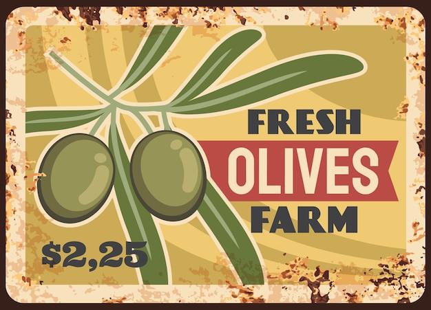 Placa de metal oxidado de la cosecha de la granja de aceitunas. rama de olivo con hojas y dibujos animados de frutos maduros.